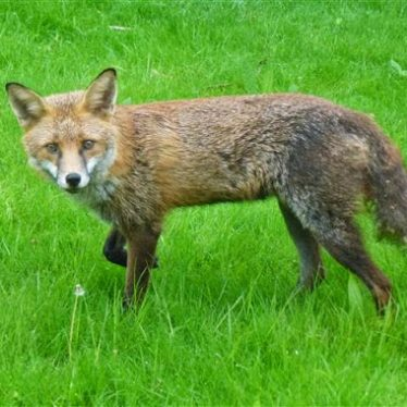 Help Needed for Recording Common Mammals in Warwickshire, Coventry and Solihull