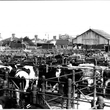 Rugby Cattle Market