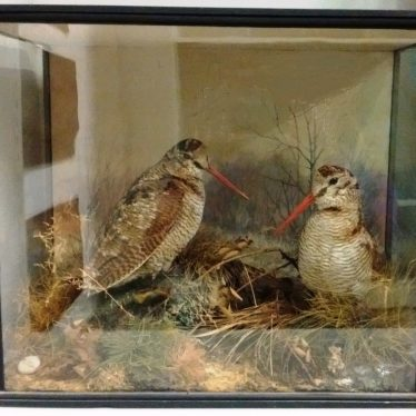 An Introduction to Warwickshire Taxidermy