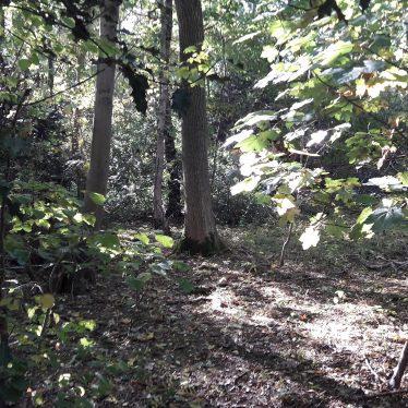 Binley Common Wood | Image courtesy of Benjamin Earl