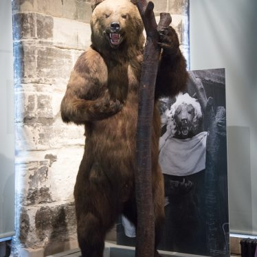 The bear is still there. | Image courtesy of Heritage & Culture Warwickshire