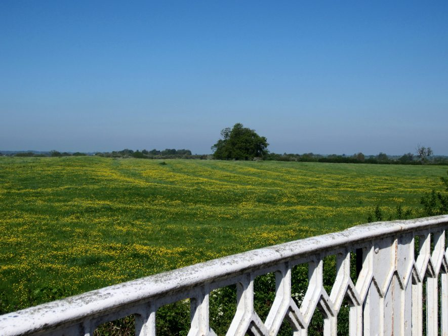 Ridge and furrow outlined by buttercups at Braunston. Canal footbridge handrail in foreground | Anne Langley