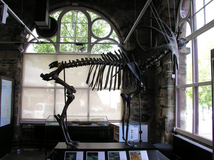 Warwickshire Museum's Giant Irish Deer | Jon Radley