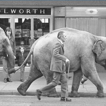 Elephants from Sir Robert Fossett's circus parading along Queen's Road, Nuneaton, 1974