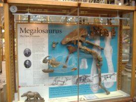 Oxford Megalosaurus | Jon Radley