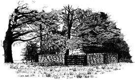 Drawing of Bentley Pound | Drawing by Kate Roberts.