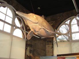 Model ichthyosaur | Photo courtesy of Warwickshire Museum