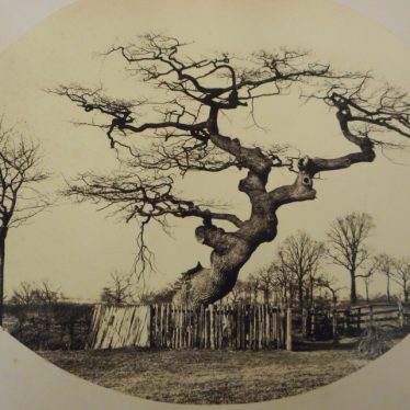 Old Trees of Warwickshire. What Stories They Could Tell?