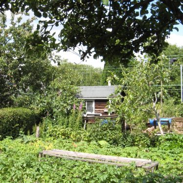 Surrounding hedge, fruit trees, vegetables and a wooden clad summerhouse | Anne Langley