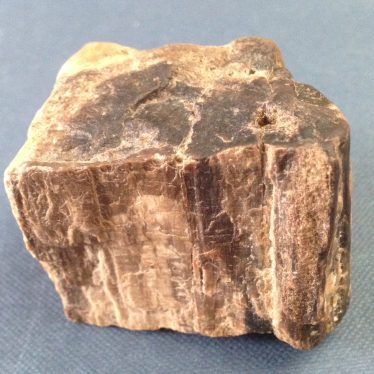 Pebble of fossil wood from Beausale.   Andy Isham