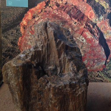 Warwickshire in 100 Objects: Fossil Wood From the Warwickshire Coalfield