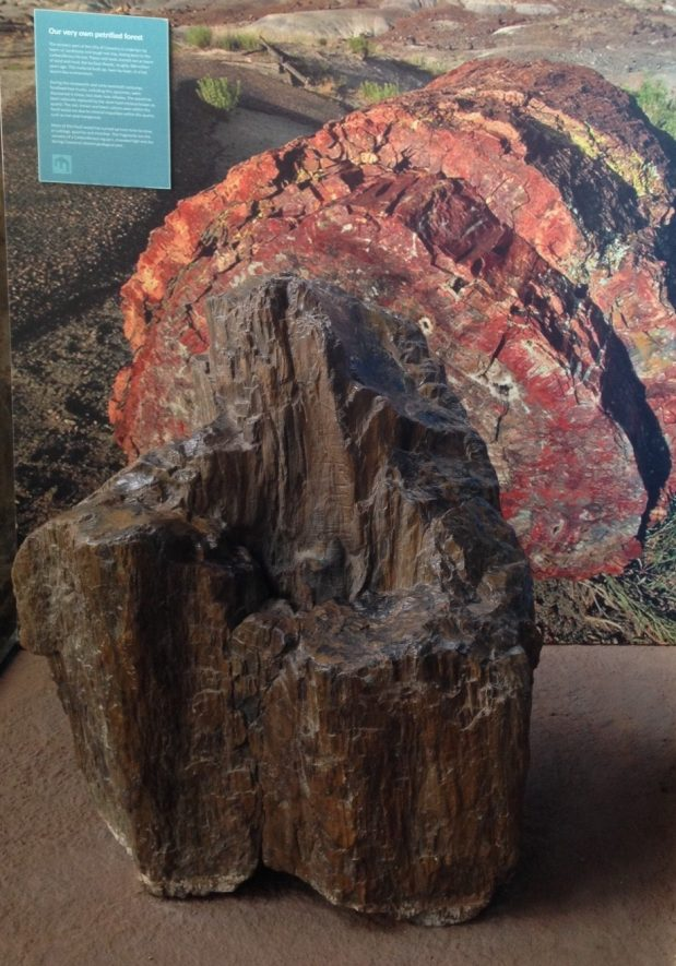 Silicified wood, Carboniferous, Allesley | Image courtesy of Warwickshire Museum