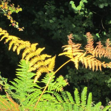 Fronds ranging from green to brown | Anne Langley
