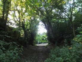 Photograph of Dark Lane, Astley, July 2015. The trees bridge over the path, casting shade. | Photo by Rachael Marsay