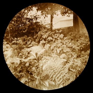 Overgrown pool with trees, monument, wall and building behind | Courtesy of Warwickshire CC, Rugby Library Local Studies Collection; WCRO PH827/5/2; photographer Rev. E. Dew