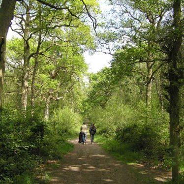Warwickshire's woodlands | Steven Falk