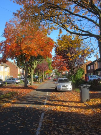 Willoughby Avenue in autumn, brown and orange trees and many leaves on the road