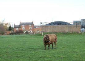 Red brick farm buildings with slate roof; cow in a field in the foreground | Anne Langley