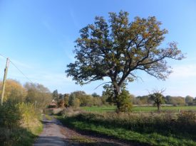 View of School Lane leading down to the river, Little Packington (October 2015)   Rachael Marsay