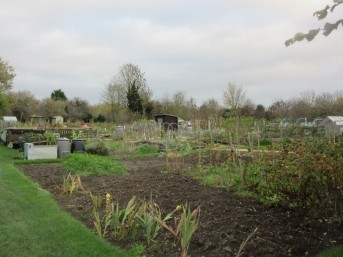 Spring Lane allotments, showing plots and a few sheds