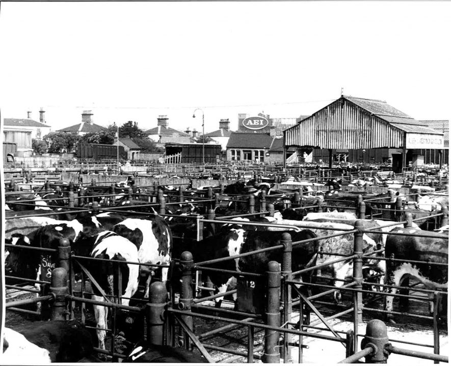 Rugby Cattle Market, 1963. | Reproduced by permission of Rugby Library.  Gift from Rugby Photographic Society