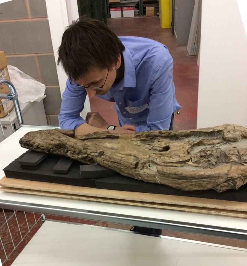 Wilmcote plesiosaur skull | Warwickshire Museum