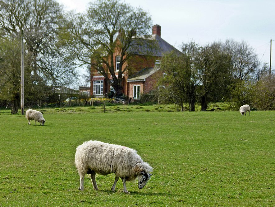Redbrick vicarage in background with sheep in fields in foreground   Image courtesy of Ian Robinson