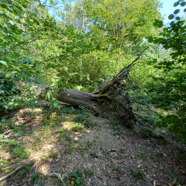 Wappenbury Wood
