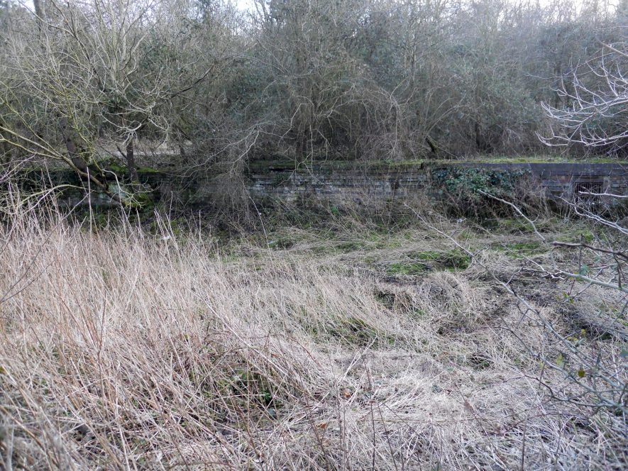 Low stone wall running horizontally at rear of photo with overhanging trees with bare branches. Overgrown grass in front of photo | Image courtesy of Ian Robinson