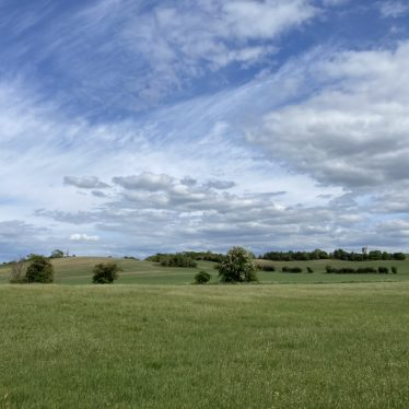 Flat green field with sparse trees and blue sky in background | Image courtesy of Becky Rooney