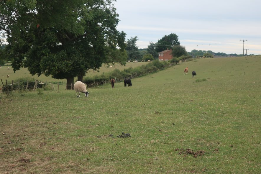 gently sloping hill with tree and hedge in background; sheep in field | Image courtesy of Gary Stocker, August 2020