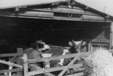 Warton.  Hillcrest Farm