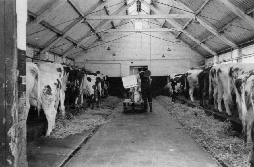 Hillcrest Farm milking sheds, Warton, c. 1951. | Image taken by Romilly Lunge, supplied by Chris Kirsten