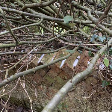 Ettington Grange (Foss Hill) garden
