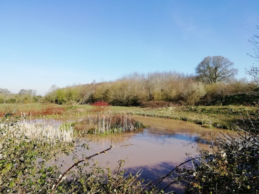 Pond with surrounding grassed area and trees to the rear | Image courtesy of Gary Stocker