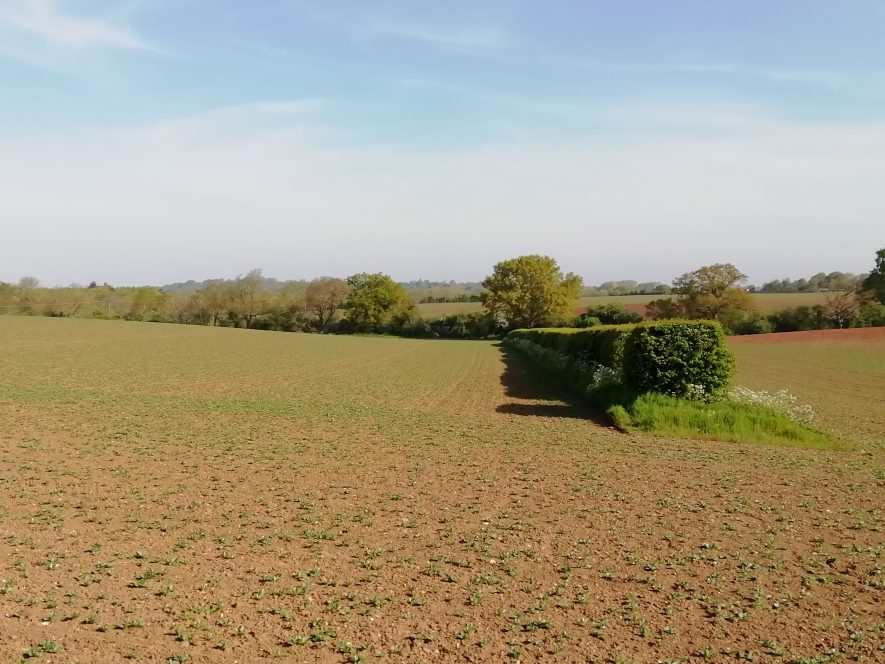 A ploughed field with trees and hedges in the background | Image courtesy of Gary Stocker April 2020