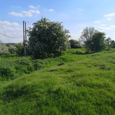 Grassy hummocks, bushes and telegraph poles | Dan Brown