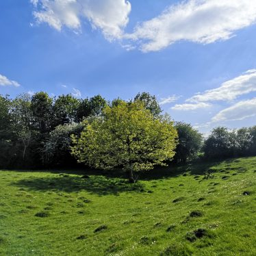 Grassy field with tree in centre, trees in background | Dan Brown