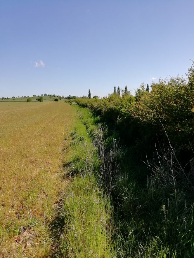 Farmer's field with ditch and hedge running from top right to bottom right of photo | Image courtesy of Gary Stocker May 2020
