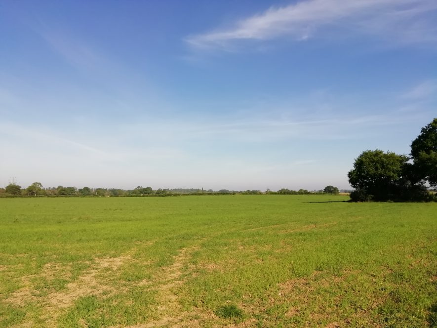 Green field with faint trackway in middle, with two trees in far right hand corner | Gary Stocker May 2020