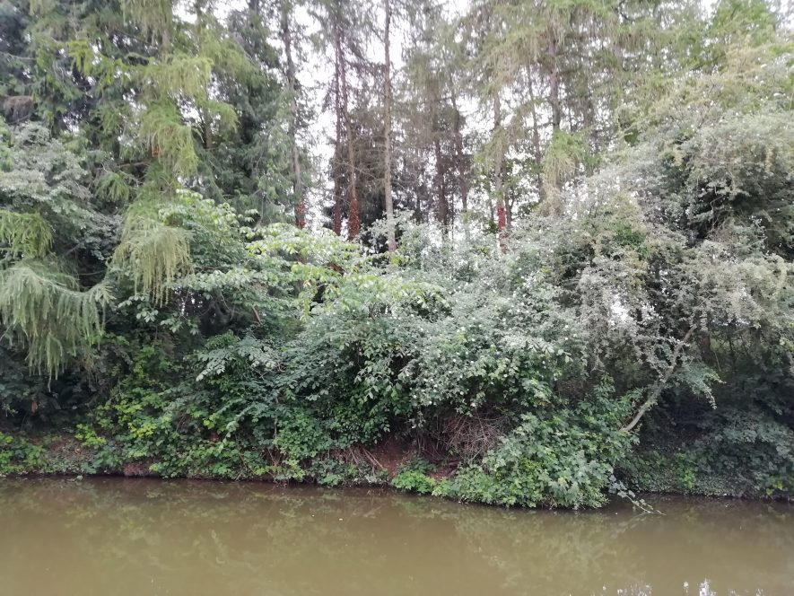 River and riverbank with trees rising up above it   Image courtesy of Gary Stocker June 2020