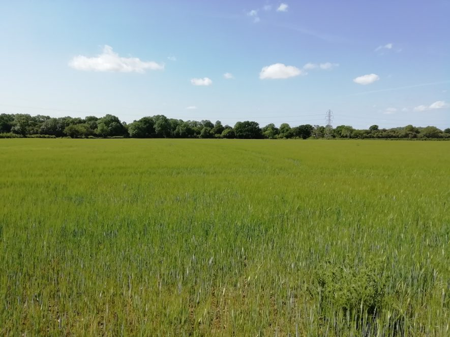 Flat grass field with hedge in background   Image courtesy of June 2020