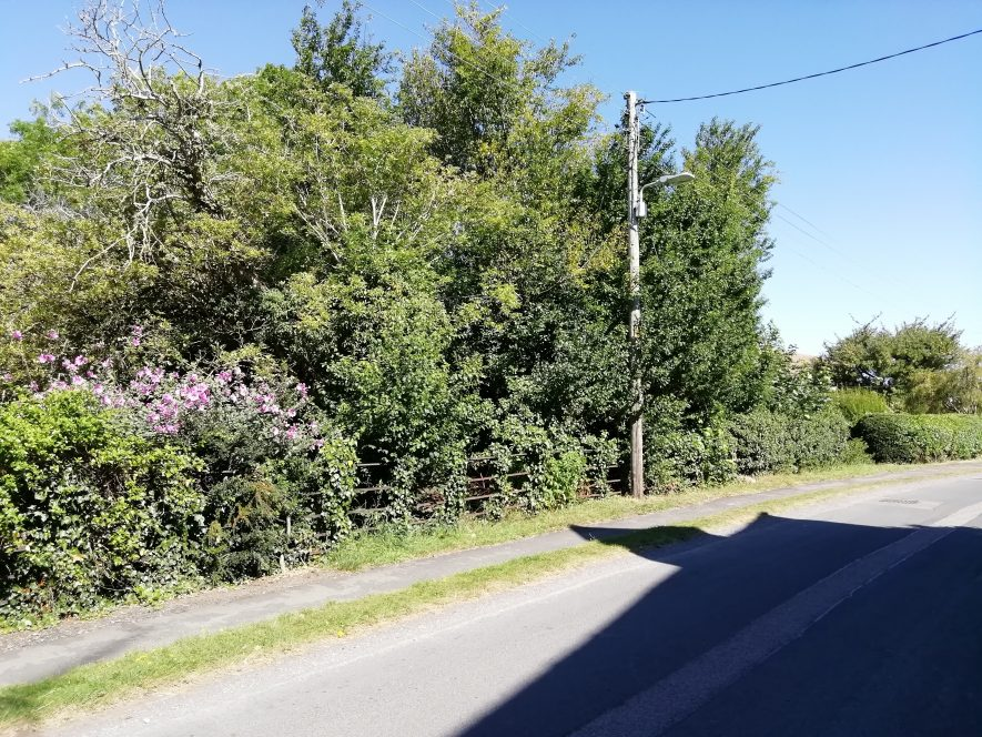 Country road going from bottom left of photo to mid right. Trees and bushes flanking left hand side of road.   Image courtesy of Gary Stocker August 2020