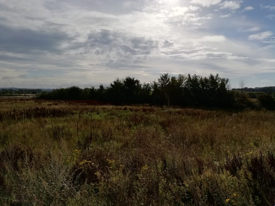 Scrubby heathland in foreground with copse of trees in background. Sunny blue sky overhead.   Image courtesy of Gary Stocker August 2020