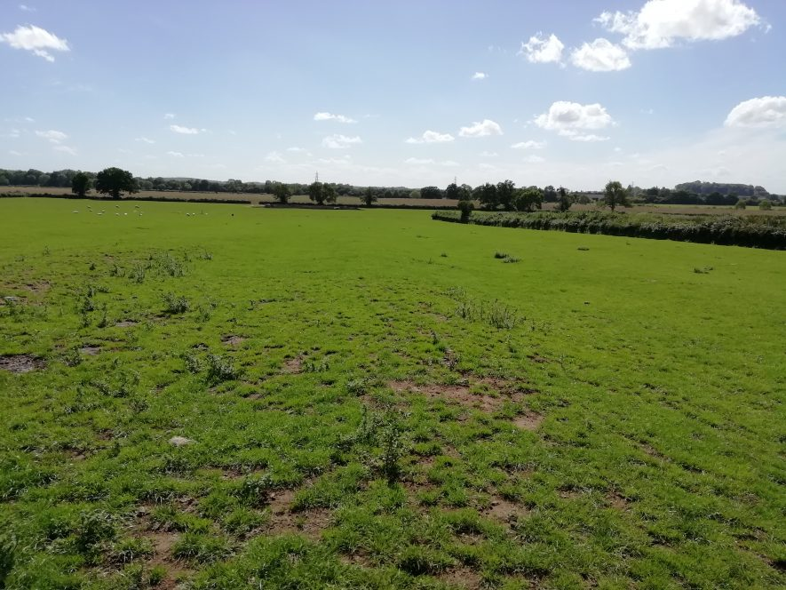 Flat green field with low treeline in far background   Image courtesy of Gary Stocker August 2020