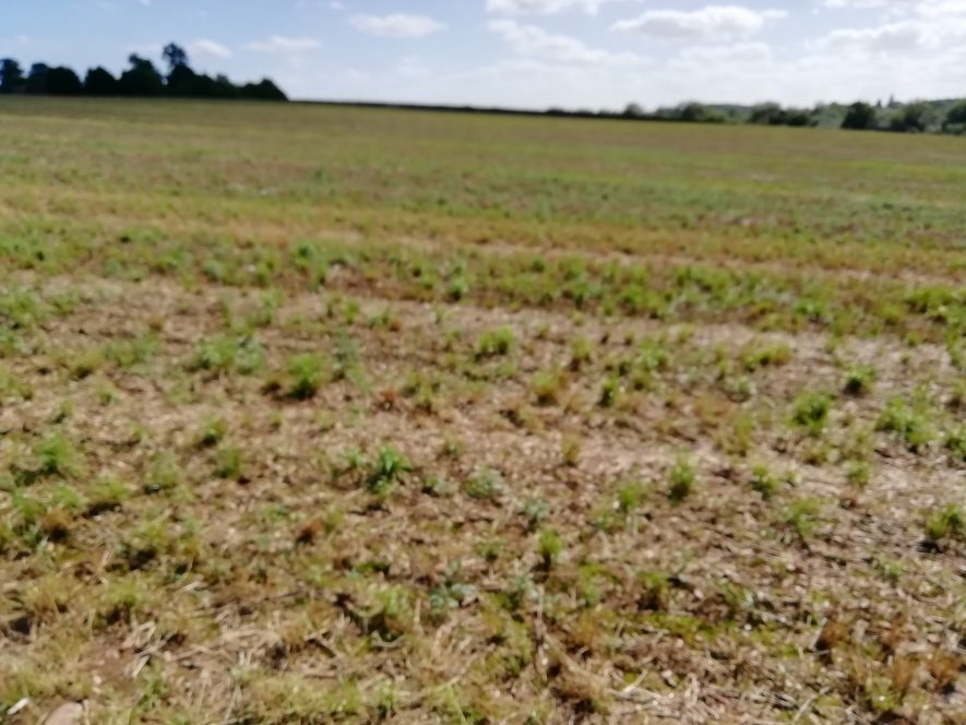 Flat ploughed field with low treeline in far background   Image courtesy of Gary Stocker August 2020