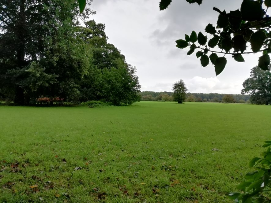 Flat grassy area surrounded by trees and shrubs | Image courtesy of Gary Stocker August 2020