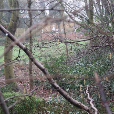 Clarendon Crescent gardens, Leamington Spa