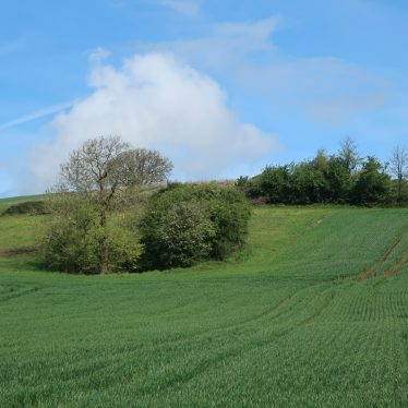 Possible Barrows West of Print Wood, Long Itchington