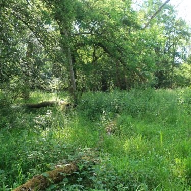 Possible Round Barrow in Bowshot Wood